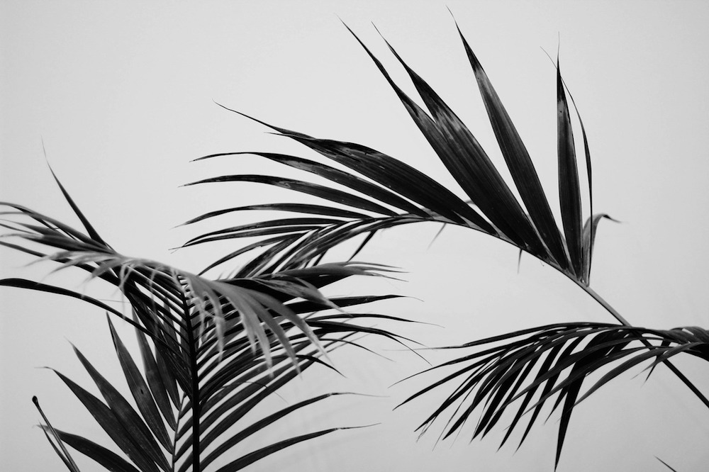 palm-tree-leaf-heat-wave-inspiration-black-and-white-oracle-fox