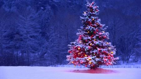 Christmas-Tree-in-Snow
