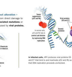 starting with a pivotal study published in 2000 researchers began honing in on the role of hpv of the 150 plus strains in the hpv family more than 40 are  [ 1451 x 744 Pixel ]