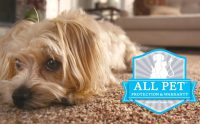 Pet Friendly Carpet Options with Mohawk's Smartstand Carpet