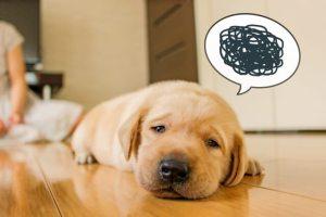 犬の食べ物