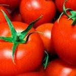 犬がトマトを食べても大丈夫
