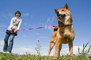 犬のリード選び