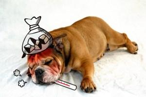 犬 ブロッコリースプラウト ブロッコリースーパースプラウト 食べる 与える 大丈夫