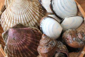犬 貝 貝類 ホタテ あさり しじみ カキ 与えない 大丈夫 危険性