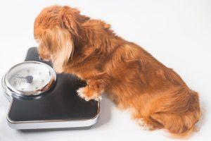 犬 さくらんぼ 食べる 大丈夫 与える 保存方法 種 食べて