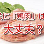 犬に鶏胸肉 もも肉 大丈夫 茹で方 効能 違い ダメ 部位