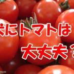 犬 トマト