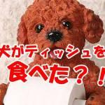 犬 ティッシュを食べた