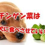 犬 チンゲン菜