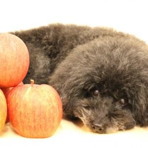 犬 リンゴジュース