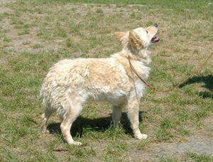 犬 ムーディ