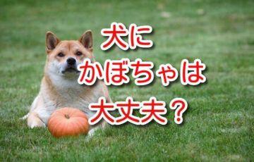 犬 かぼちゃ