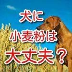 犬 小麦粉