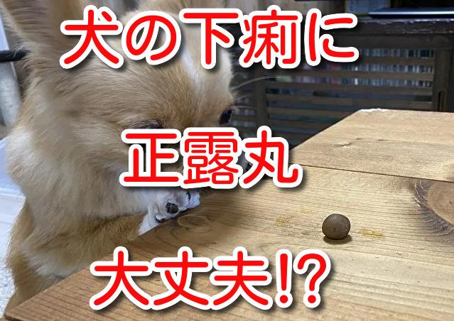 犬 正露丸