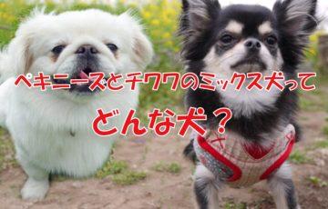 犬 ペキニーズ チワワ ペキチー ペキチワ
