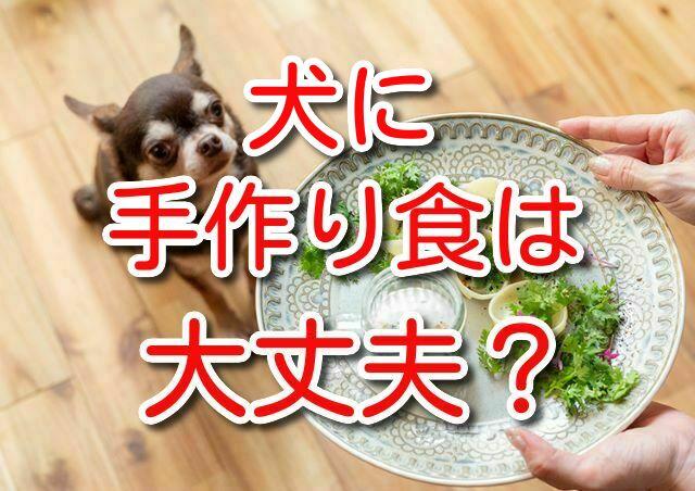 犬 手作り食 手作りご飯