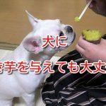 犬 焼き芋