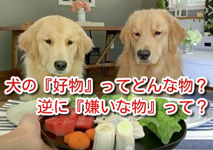 犬 好物 犬の好物