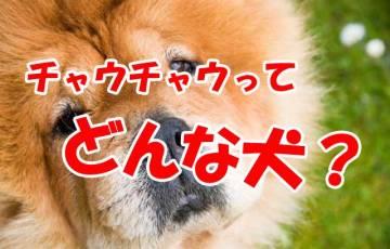 チャウチャウ 犬