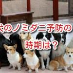 犬 ノミダニ予防 時期