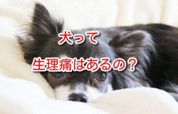 犬 生理痛