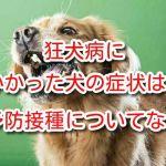 犬 狂犬病
