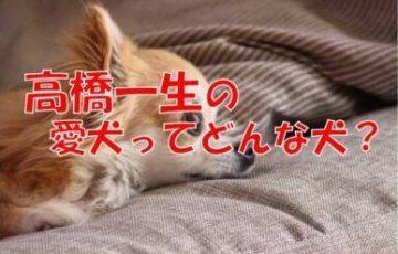 高橋一生 愛犬 ちわわ