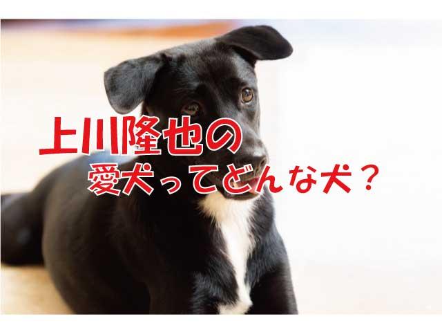 上川隆也 犬 保護犬