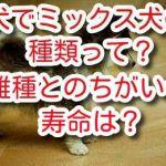 犬 ミックス