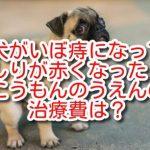 犬 いぼ痔