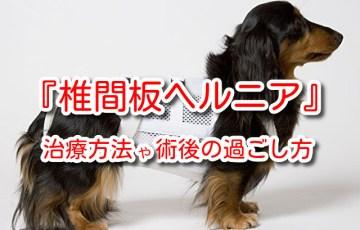 犬 ヘルニア 初期 症状