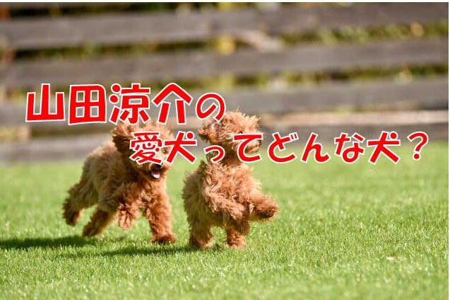 山田涼介 犬 ペット