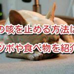 犬 咳止め