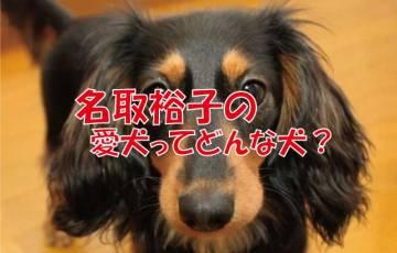 名取裕子 犬