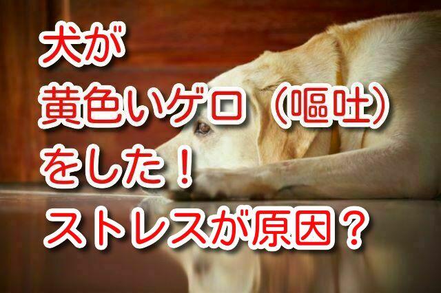 犬 黄色 嘔吐