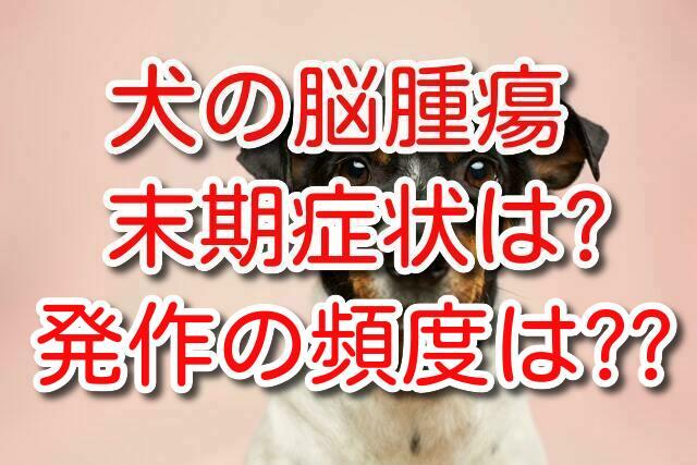 犬 脳腫瘍