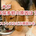 犬 多飲多尿