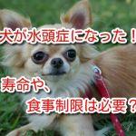 犬 水頭症 寿命