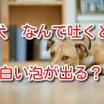 犬 吐く 白い泡