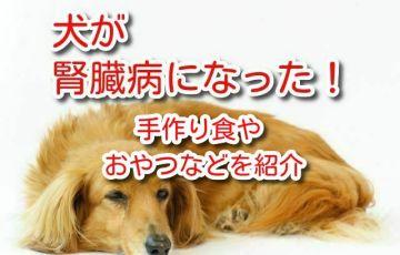犬 腎臓病