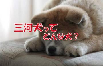 三河犬 絶滅 日本犬