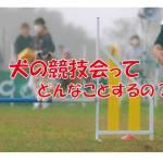 犬 競技会 訓練
