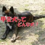 甲斐犬 和犬 日本犬