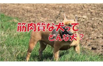 筋肉質 犬 マッチョ
