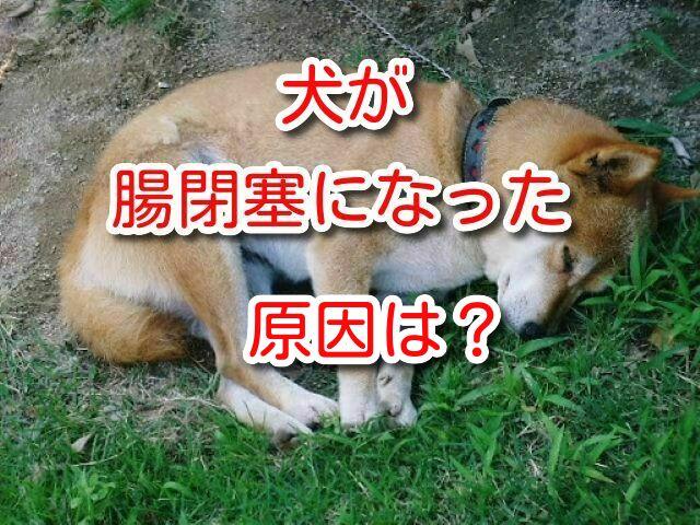 犬 腸閉塞