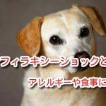 アナフィラキシー ショック 犬