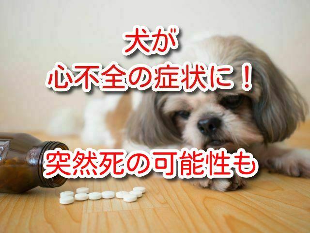犬 心不全 症状