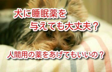 犬 睡眠薬