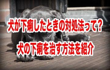 犬 下痢 対処 法